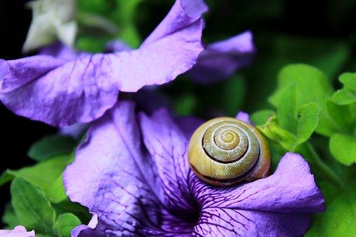 snail-1628480__340