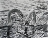 """Swan Lake"" Pastel by Keren Dibbens-Wyatt using a photo by David Laker with kind permission"
