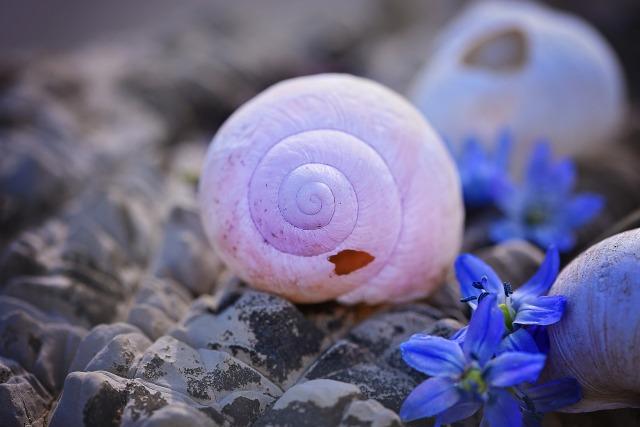 shell-756724_1920