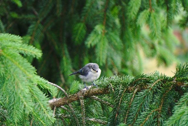 fledgling-2384598_1280