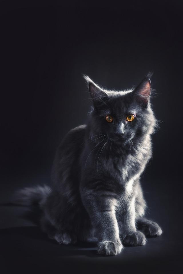 tomcat-3092804_1920