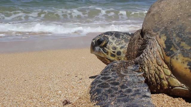 turtle-2081273_1280